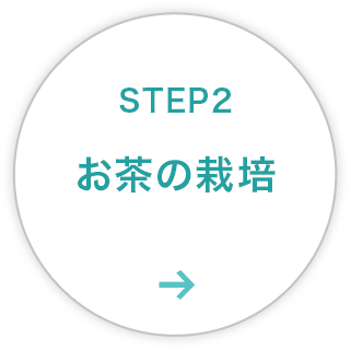 STEP2:お茶の栽培
