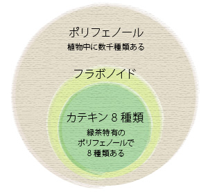 お茶の成分と健康性         カテキン       カテキンとはお茶の成長や場所によって成分の含有量が違うお茶の成分と健康性